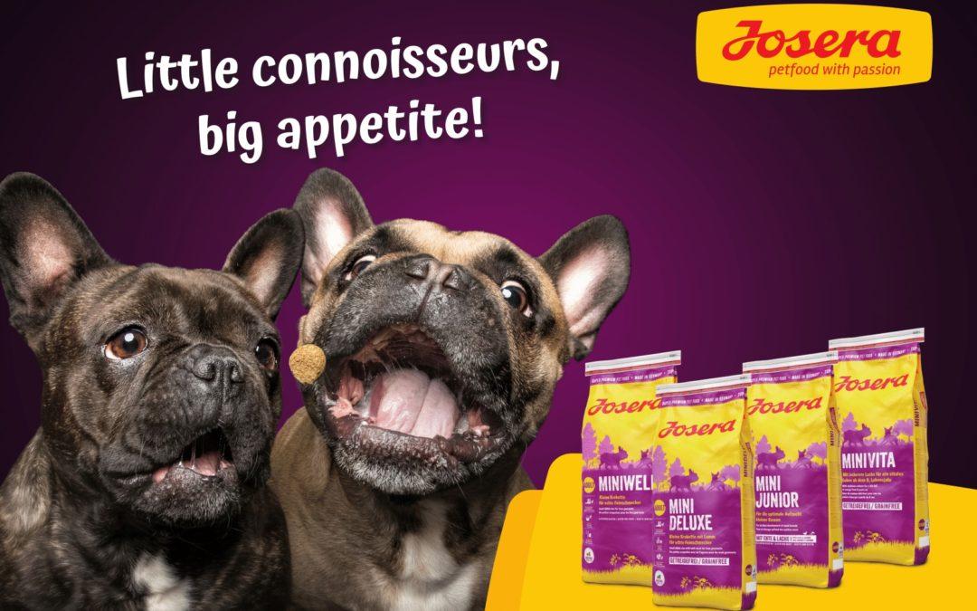 Royal Canin Mini Puppy Dry Dog Food - 800 gm: